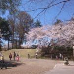 軽井沢から20分 御代田「雪窓公園」の桜が見ごろ