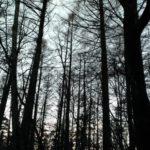 夕方の森と夕焼け